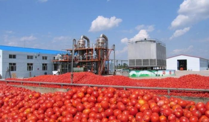 Dangote Tomato Company to resume operation soon – MD