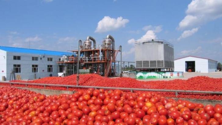 tomato company