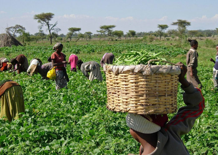 FG plans to buy excess produce from farmers