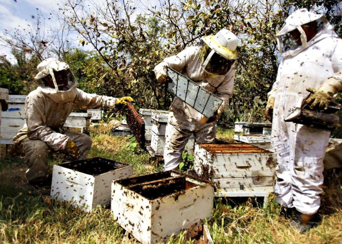 Association to train 2,000 bee farmers on modern bee keeping techniques