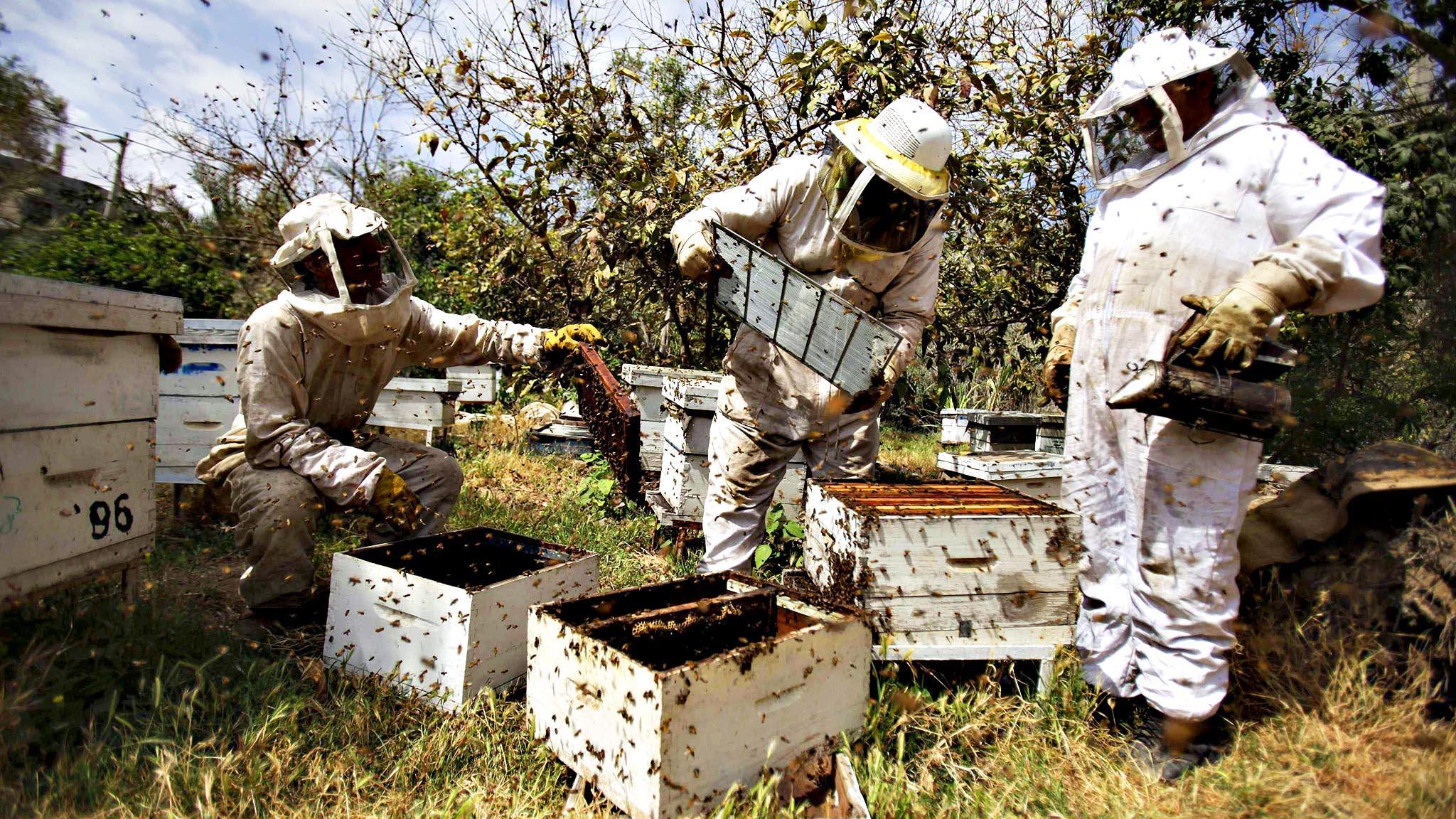 bee-keepers