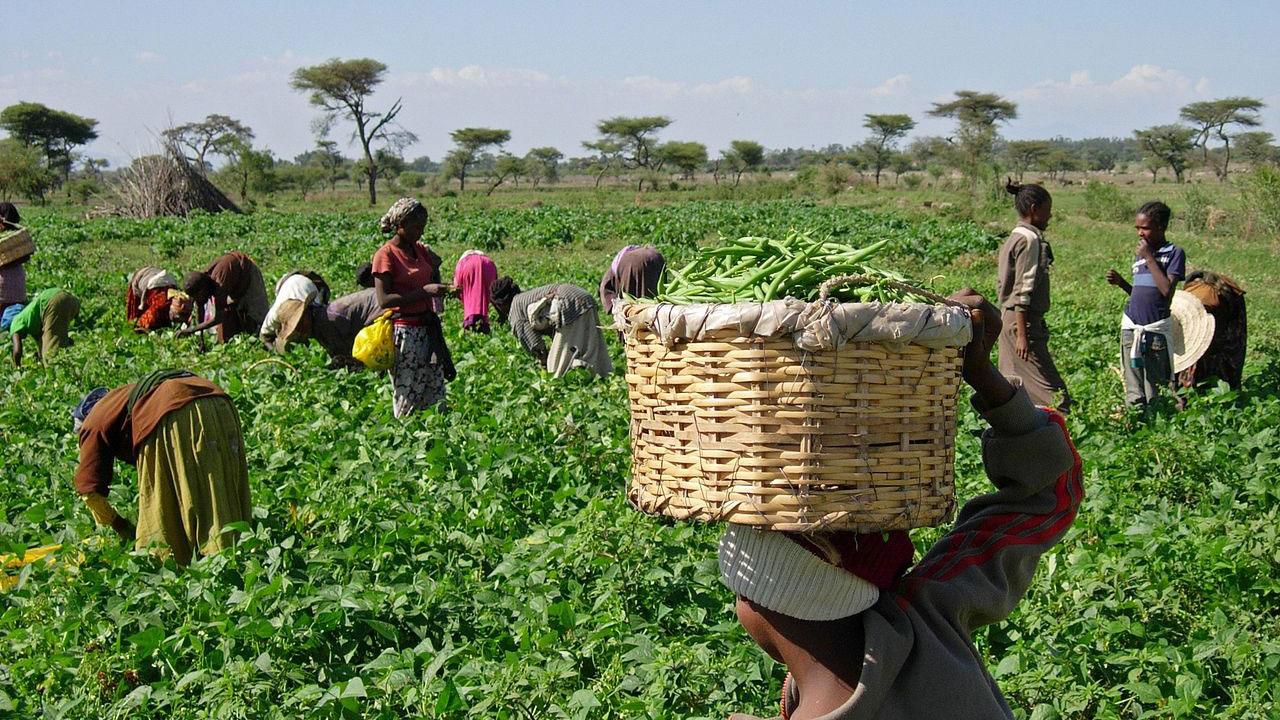 agro enterprises