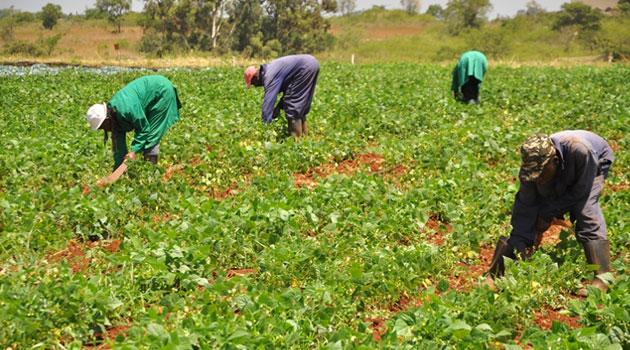 FARMERS-KENYA