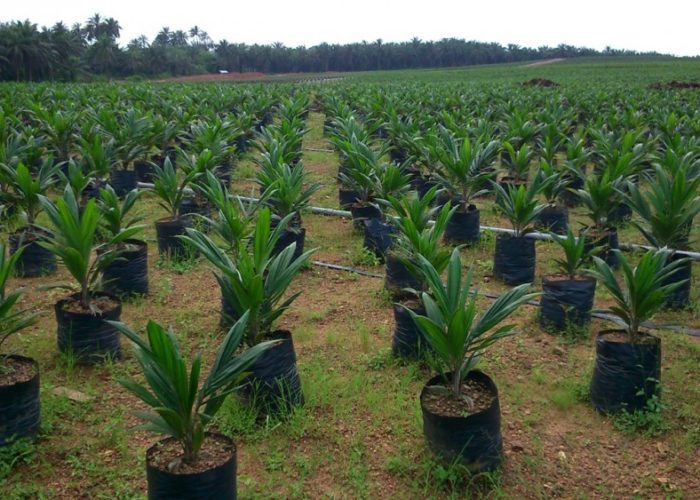 NASC plans to go digital on seeds certification – DG